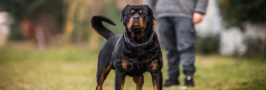 Quelle assurance pour un chien dangereux